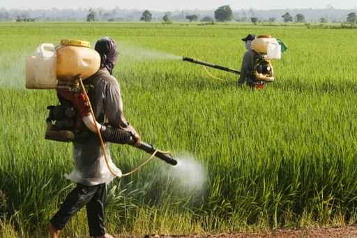 pesticides agriculteurs