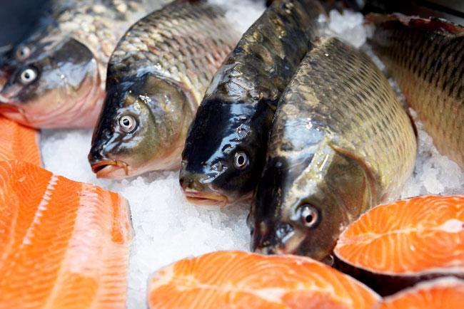 saumon diflubenzuron